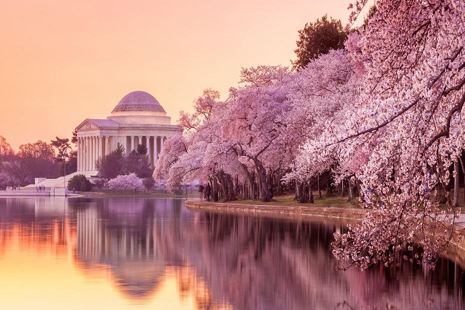 Travelhouse National Cherry Blossom Festival